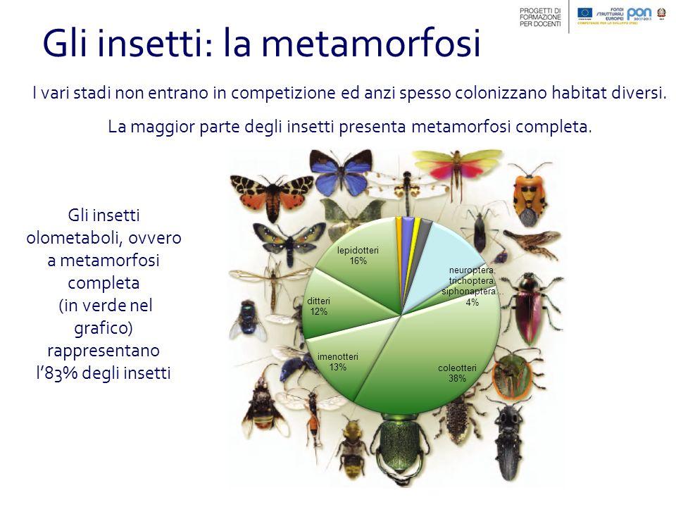 Gli insetti: la metamorfosi