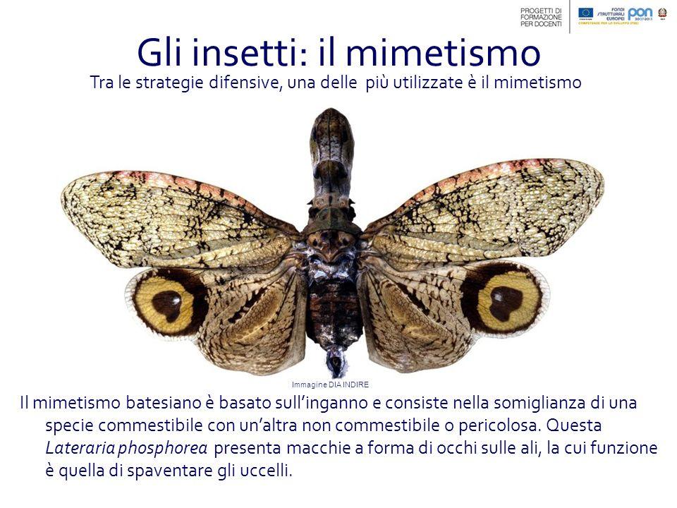 Gli insetti: il mimetismo