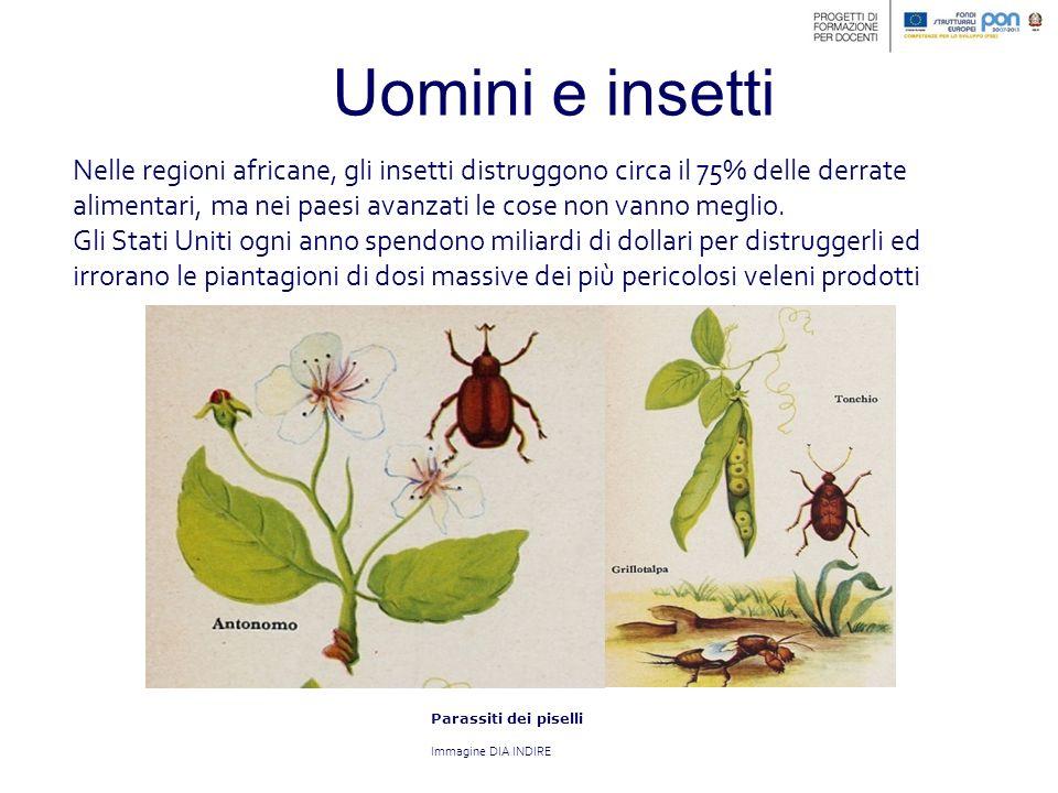 Uomini e insetti