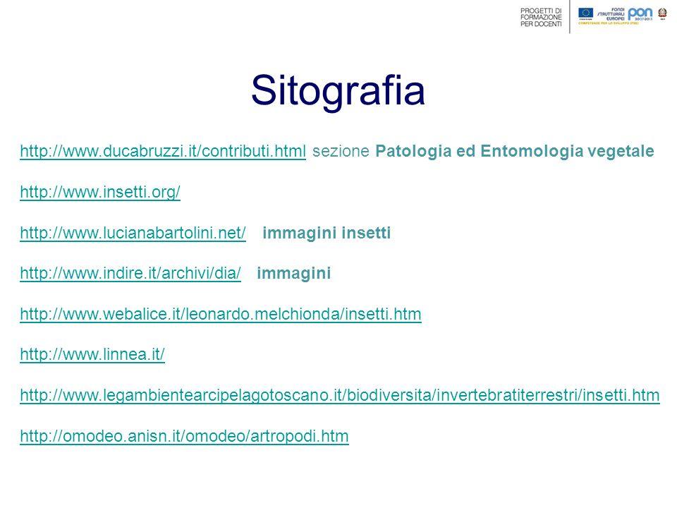 Sitografia http://www.ducabruzzi.it/contributi.html sezione Patologia ed Entomologia vegetale. http://www.insetti.org/