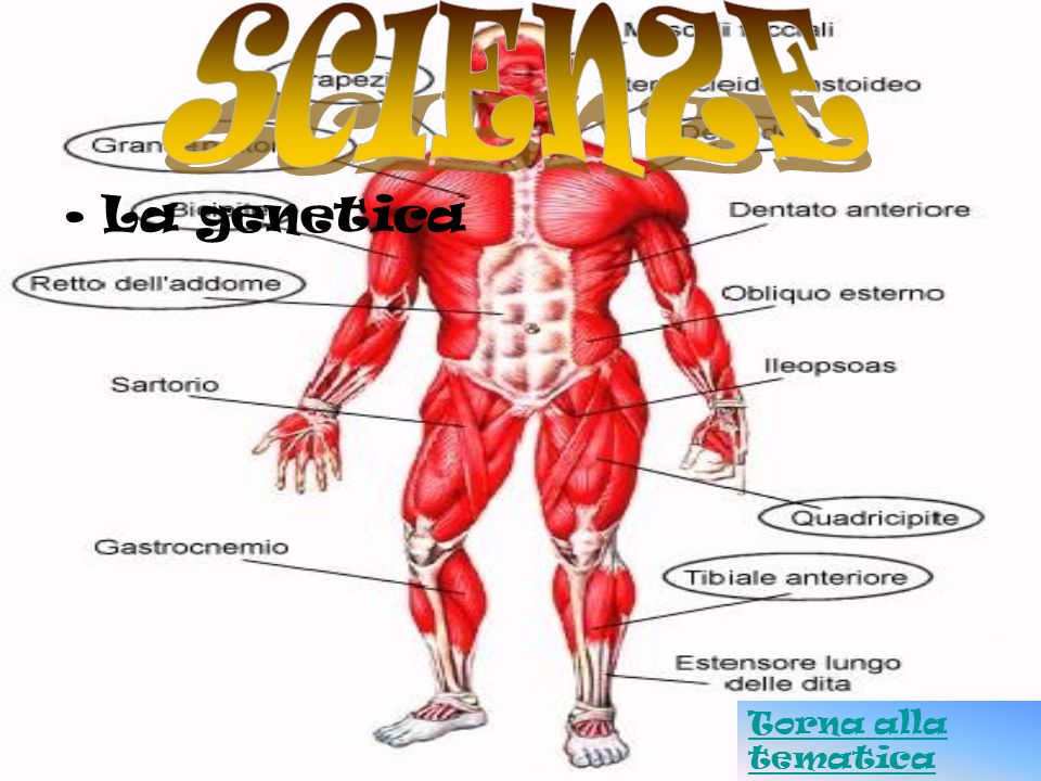SCIENZE La genetica Torna alla tematica