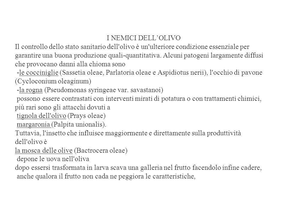 I NEMICI DELL'OLIVO Il controllo dello stato sanitario dell olivo è un ulteriore condizione essenziale per garantire una buona produzione quali-quantitativa.