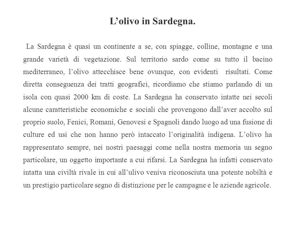 L'olivo in Sardegna.