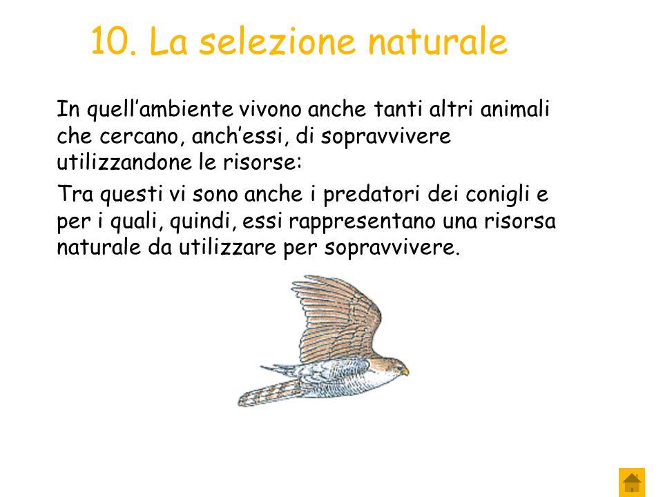 10. La selezione naturale In quell'ambiente vivono anche tanti altri animali che cercano, anch'essi, di sopravvivere utilizzandone le risorse:
