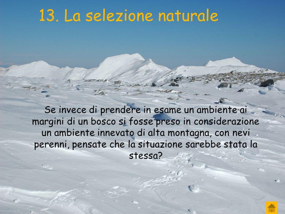 13. La selezione naturale