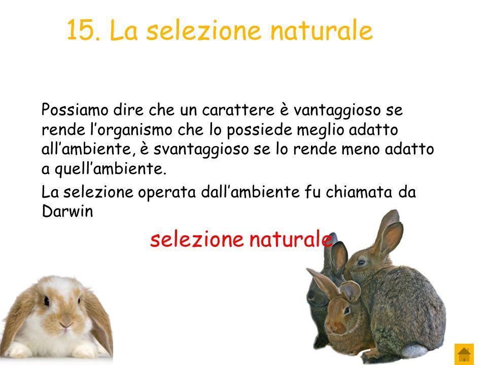 15. La selezione naturale selezione naturale
