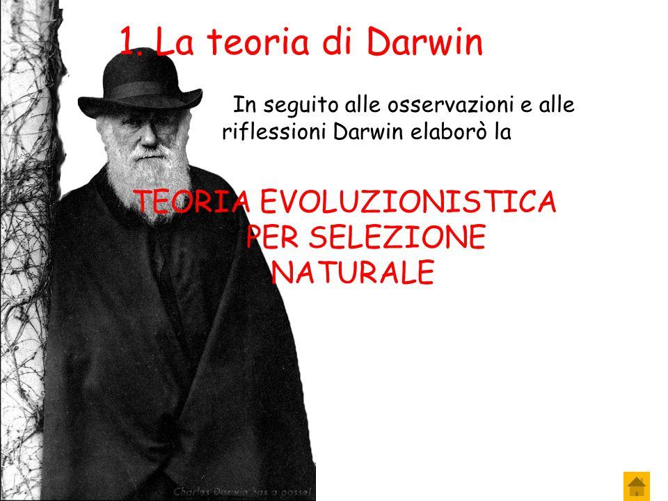 1. La teoria di Darwin TEORIA EVOLUZIONISTICA PER SELEZIONE NATURALE….