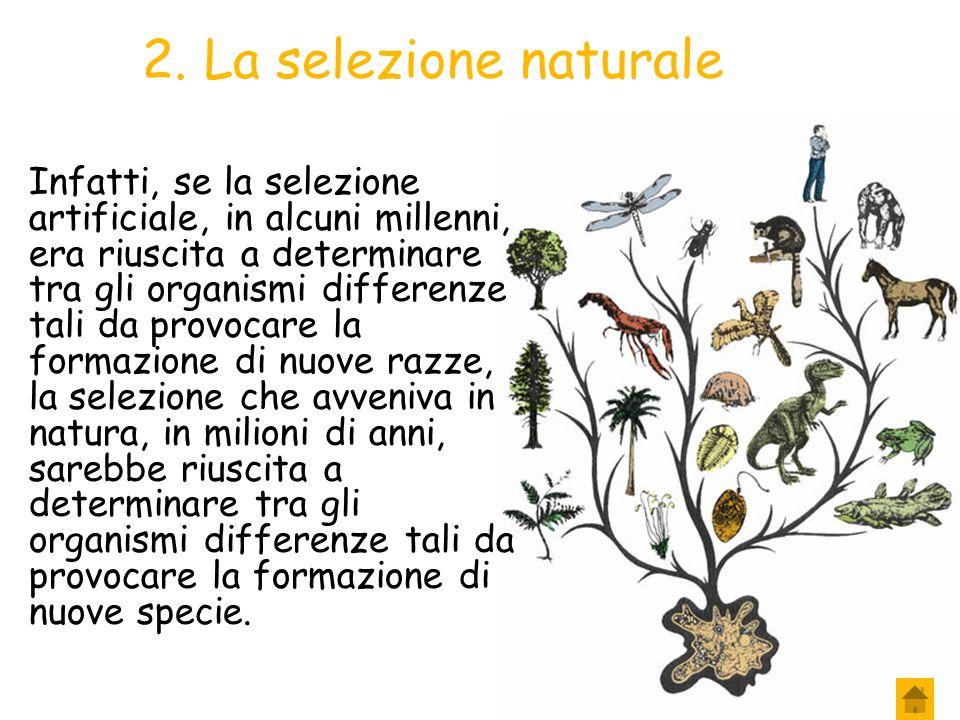 2. La selezione naturale