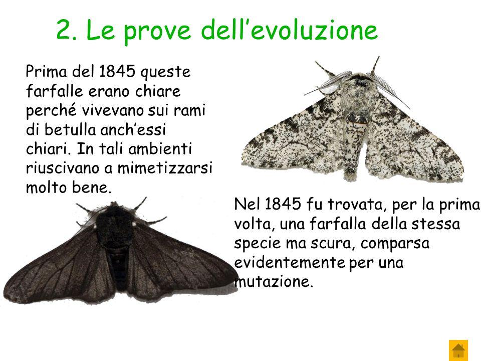 2. Le prove dell'evoluzione