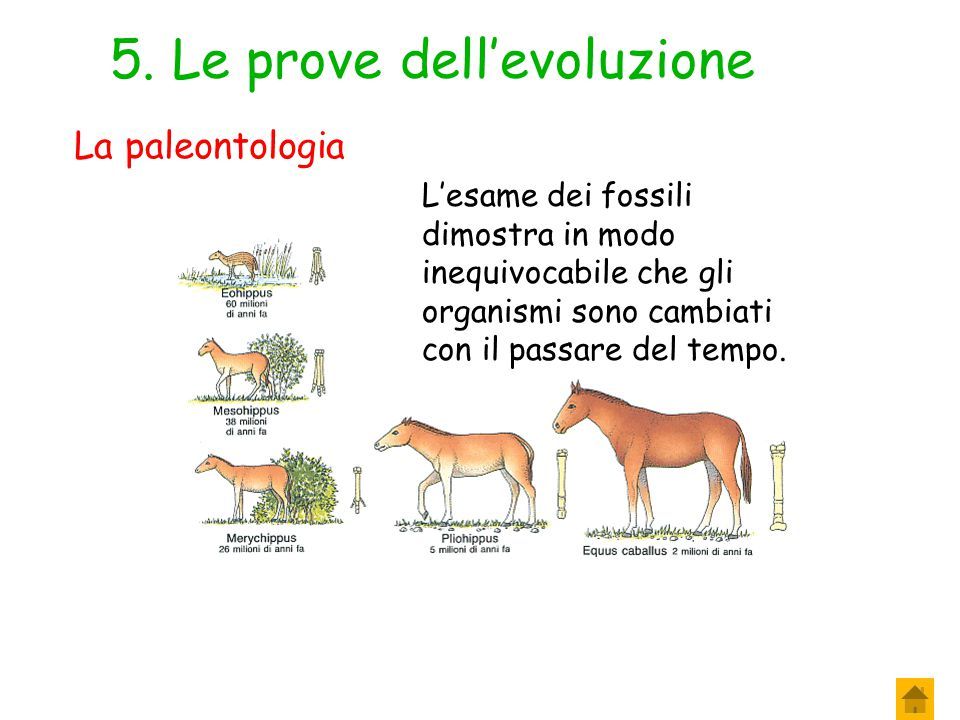 5. Le prove dell'evoluzione
