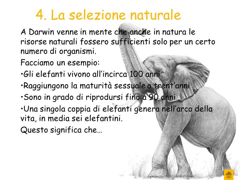 4. La selezione naturale A Darwin venne in mente che anche in natura le risorse naturali fossero sufficienti solo per un certo numero di organismi.