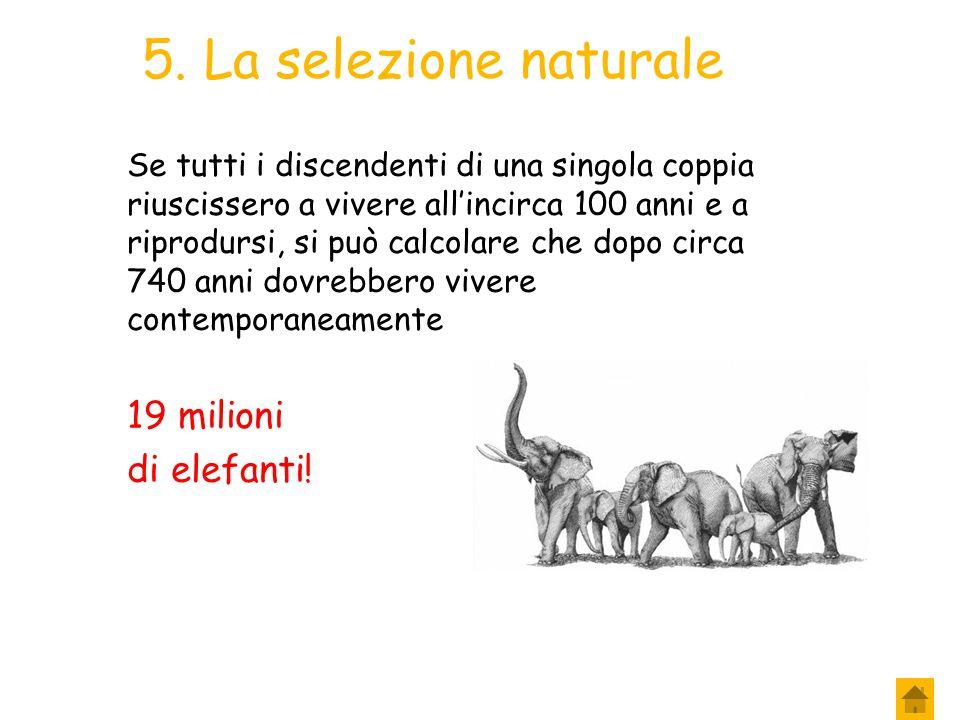5. La selezione naturale 19 milioni di elefanti!