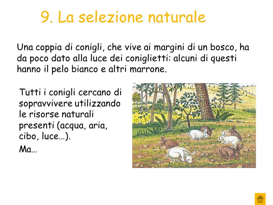 9. La selezione naturale