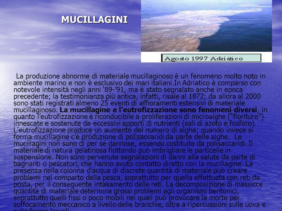 MUCILLAGINI