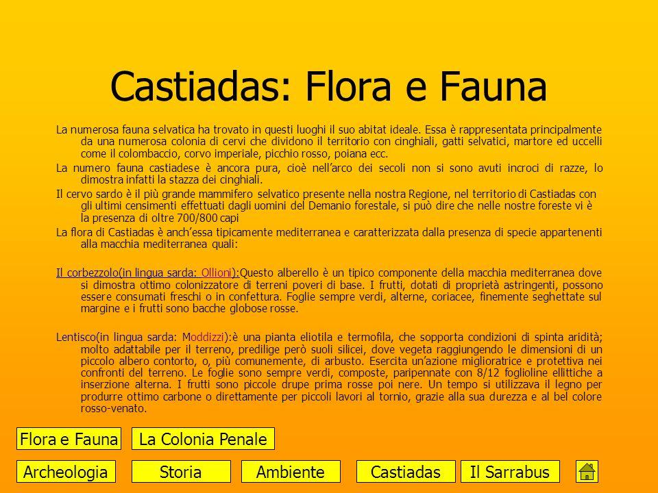 Castiadas: Flora e Fauna