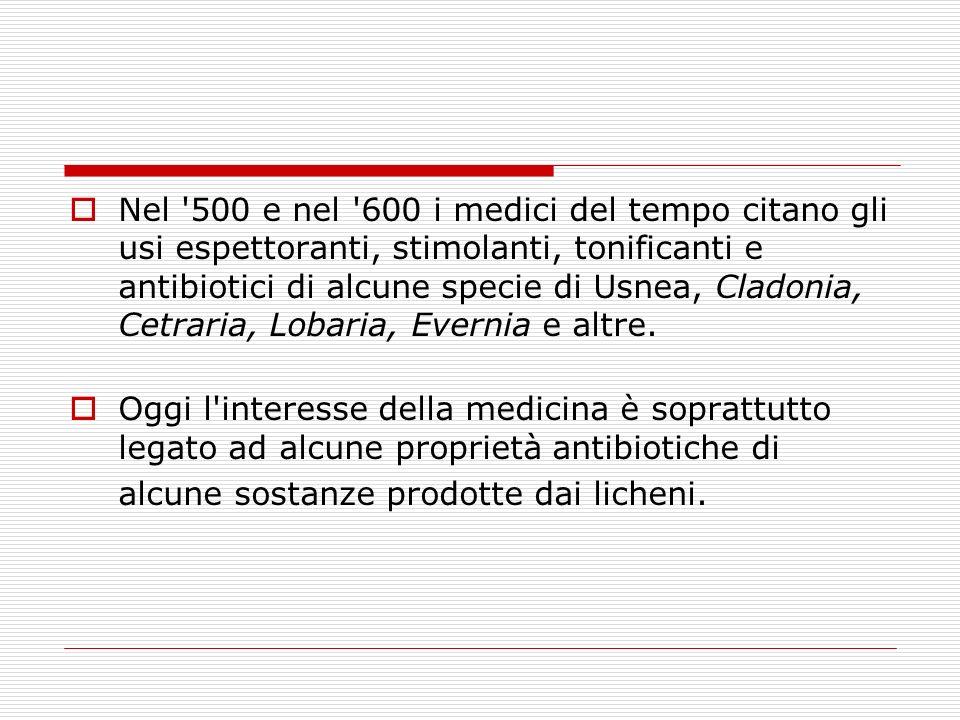 Nel 500 e nel 600 i medici del tempo citano gli usi espettoranti, stimolanti, tonificanti e antibiotici di alcune specie di Usnea, Cladonia, Cetraria, Lobaria, Evernia e altre.