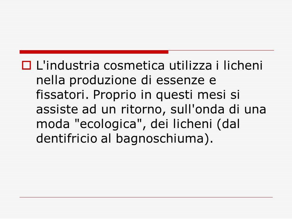 L industria cosmetica utilizza i licheni nella produzione di essenze e fissatori.