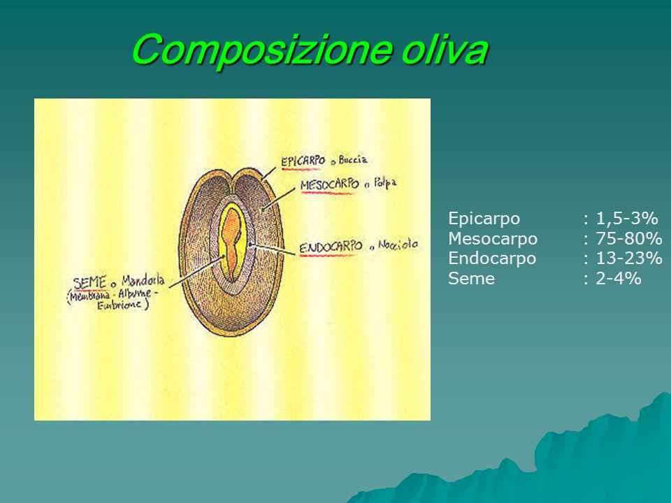 Composizione oliva Epicarpo : 1,5-3% Mesocarpo : 75-80%