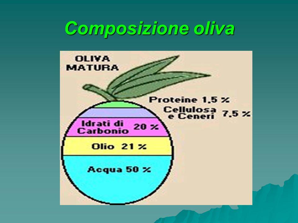 Composizione oliva