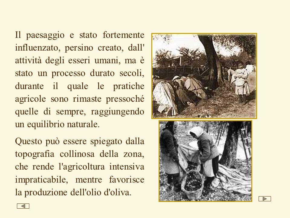 Il paesaggio e stato fortemente influenzato, persino creato, dall attività degli esseri umani, ma è stato un processo durato secoli, durante il quale le pratiche agricole sono rimaste pressoché quelle di sempre, raggiungendo un equilibrio naturale.