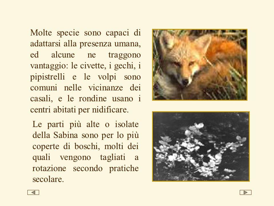 Molte specie sono capaci di adattarsi alla presenza umana, ed alcune ne traggono vantaggio: le civette, i gechi, i pipistrelli e le volpi sono comuni nelle vicinanze dei casali, e le rondine usano i centri abitati per nidificare.