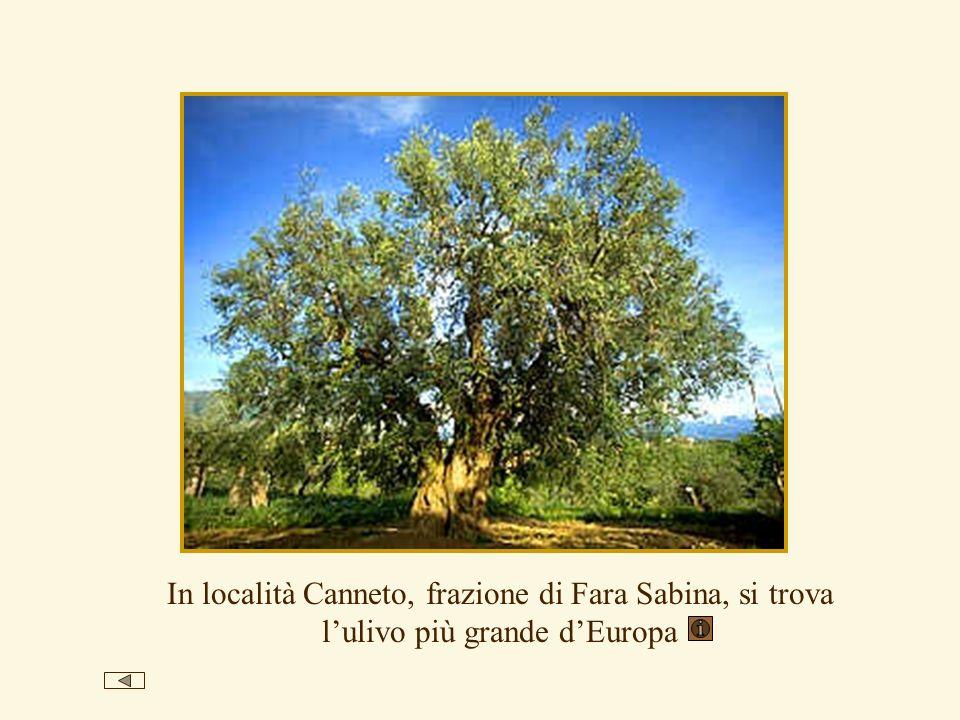 In località Canneto, frazione di Fara Sabina, si trova l'ulivo più grande d'Europa