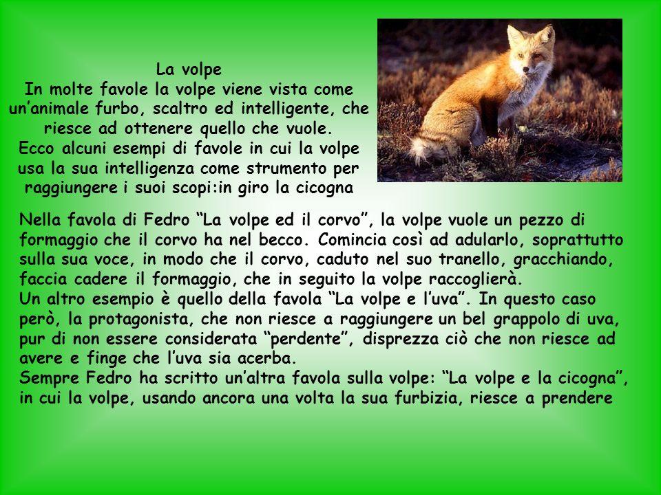 La volpe In molte favole la volpe viene vista come un'animale furbo, scaltro ed intelligente, che riesce ad ottenere quello che vuole.