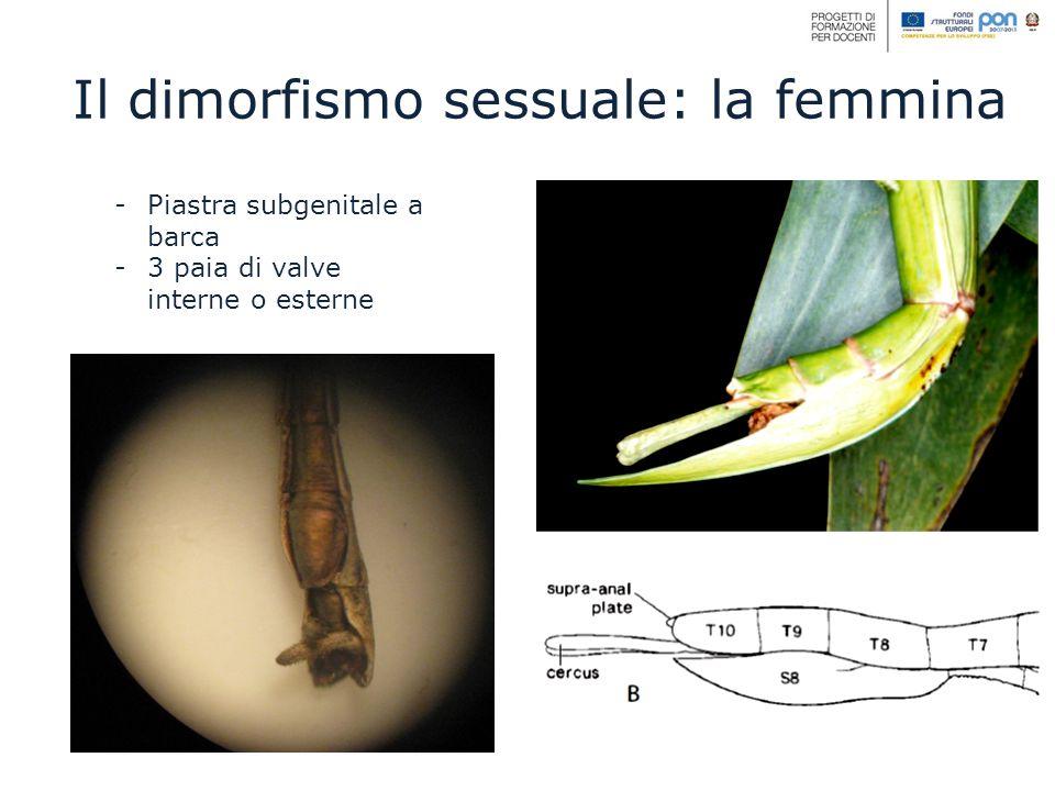 Il dimorfismo sessuale: la femmina