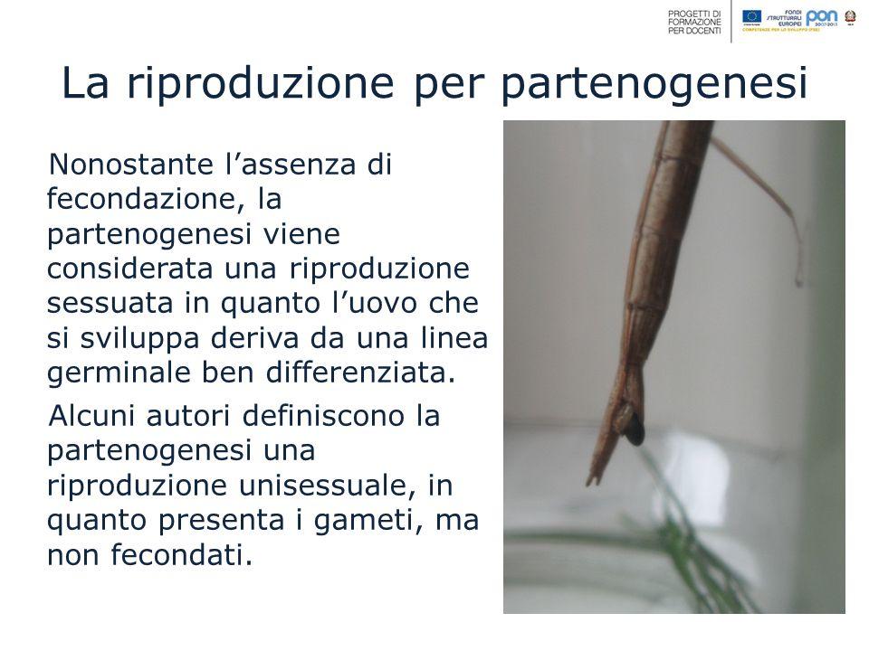 La riproduzione per partenogenesi