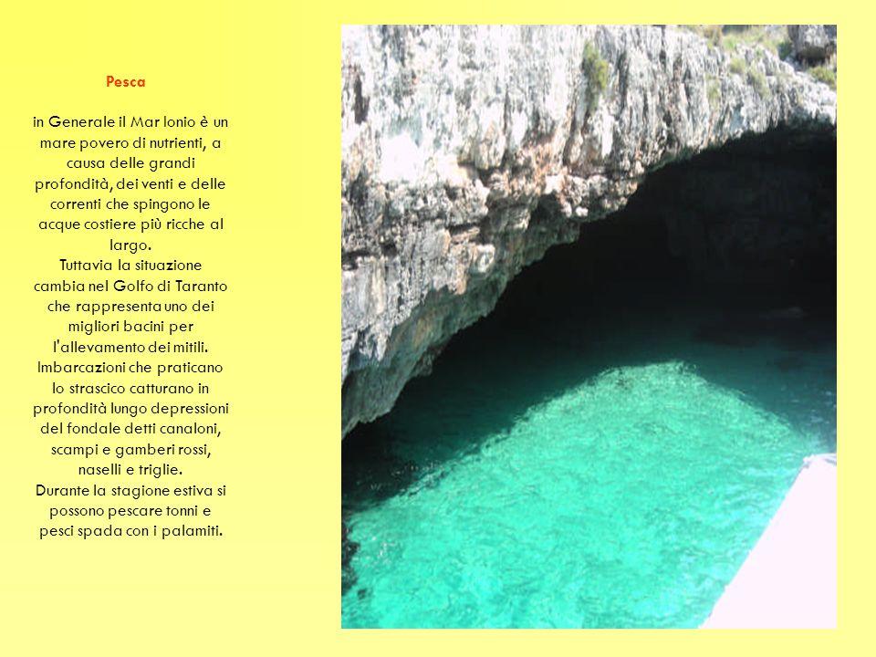 Pesca in Generale il Mar Ionio è un mare povero di nutrienti, a causa delle grandi profondità, dei venti e delle correnti che spingono le acque costiere più ricche al largo.