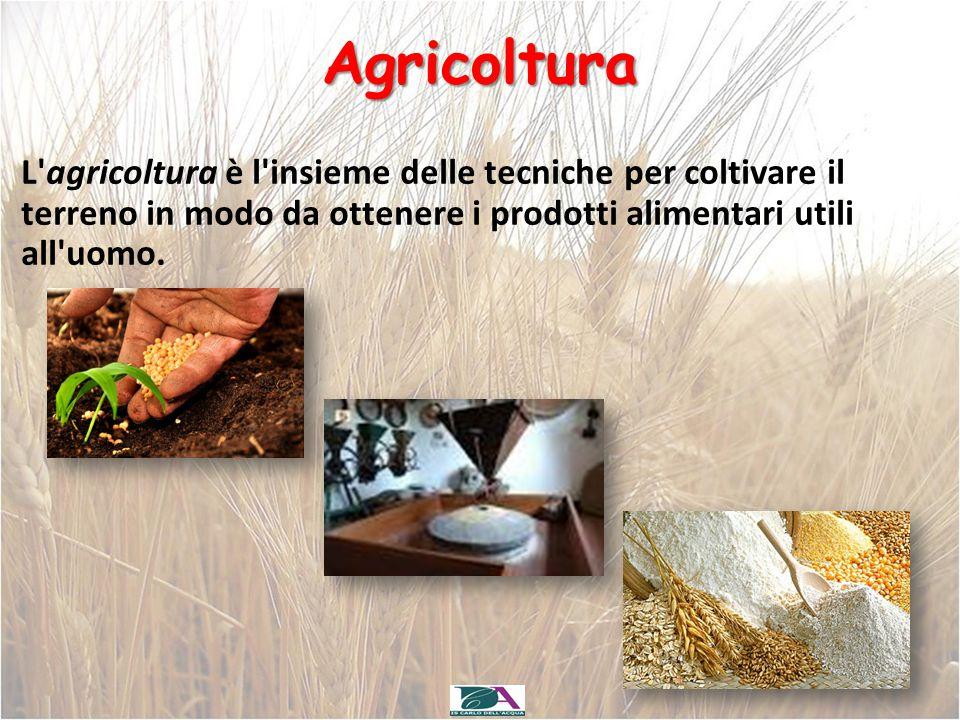 Agricoltura L agricoltura è l insieme delle tecniche per coltivare il terreno in modo da ottenere i prodotti alimentari utili all uomo.