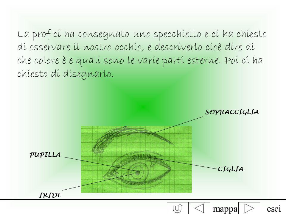 La prof ci ha consegnato uno specchietto e ci ha chiesto di osservare il nostro occhio, e descriverlo cioè dire di che colore è e quali sono le varie parti esterne. Poi ci ha chiesto di disegnarlo.