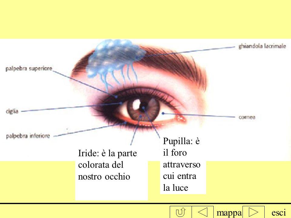 Pupilla: è il foro attraverso cui entra la luce