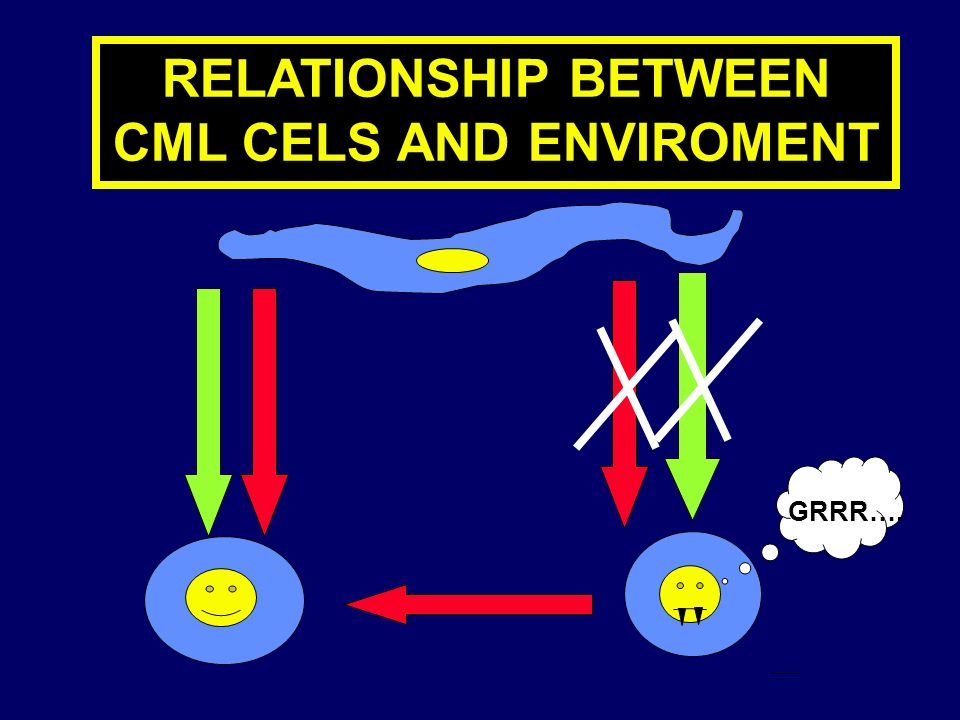 RELATIONSHIP BETWEEN CML CELS AND ENVIROMENT