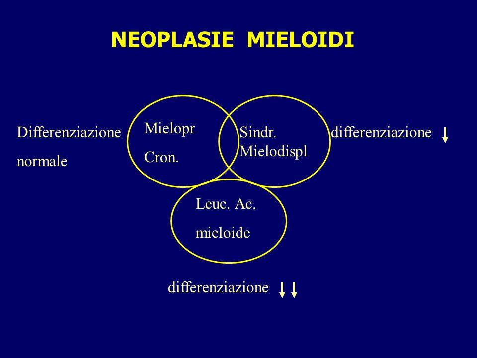 NEOPLASIE MIELOIDI Mielopr. Cron. Differenziazione normale