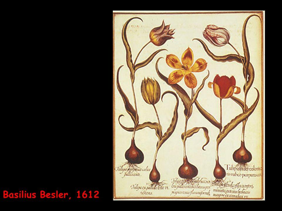 Basilius Besler, 1612