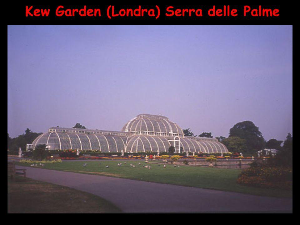 Kew Garden (Londra) Serra delle Palme