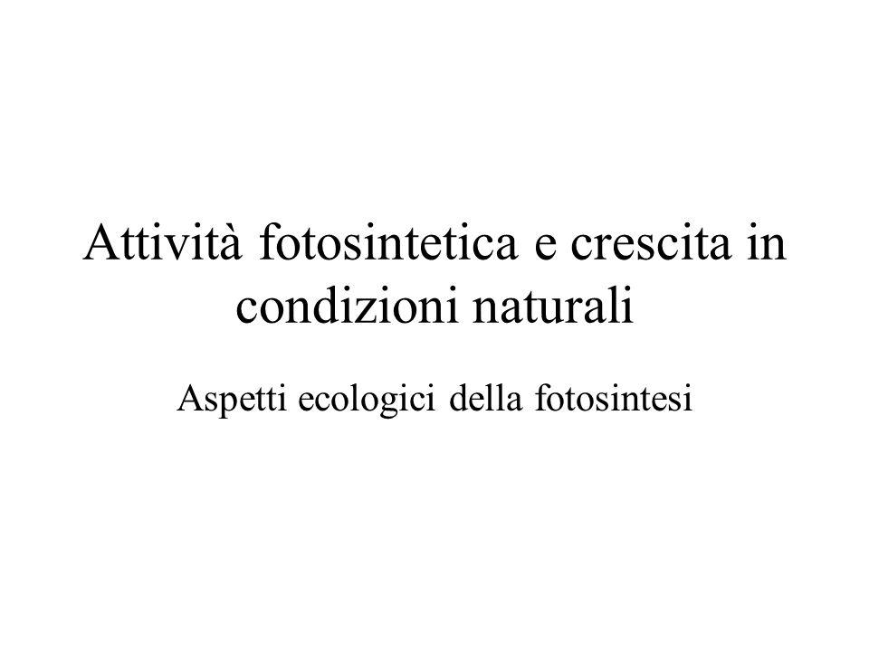 Attività fotosintetica e crescita in condizioni naturali
