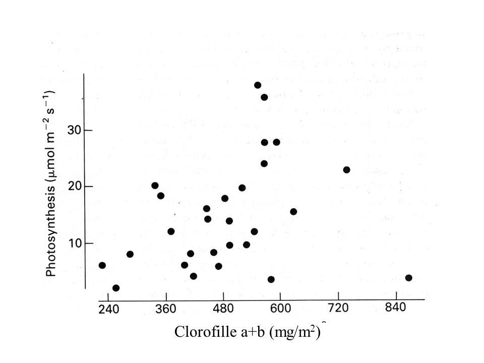 Clorofille a+b (mg/m2)