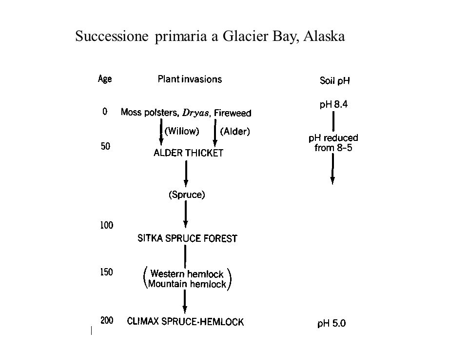 Successione primaria a Glacier Bay, Alaska