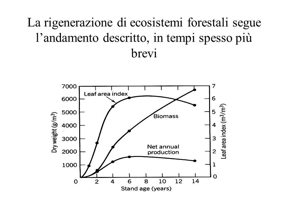 La rigenerazione di ecosistemi forestali segue l'andamento descritto, in tempi spesso più brevi