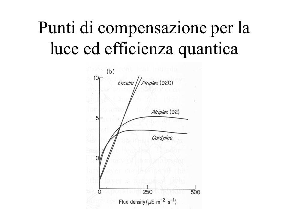 Punti di compensazione per la luce ed efficienza quantica