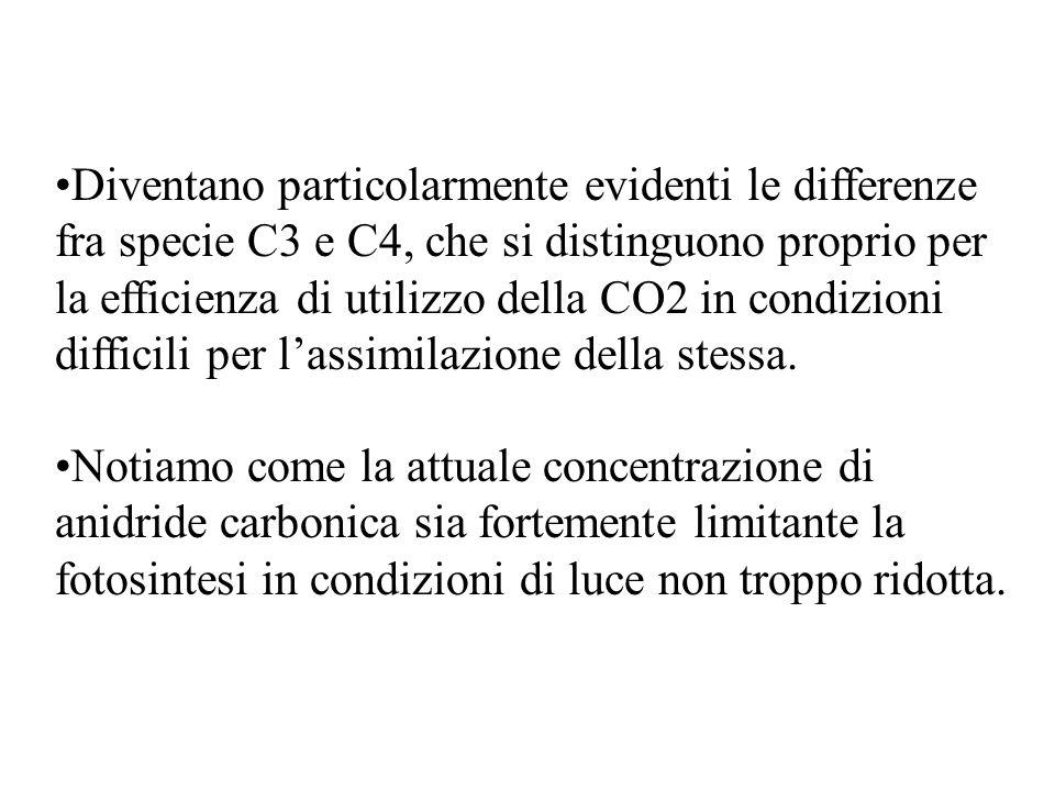Diventano particolarmente evidenti le differenze fra specie C3 e C4, che si distinguono proprio per la efficienza di utilizzo della CO2 in condizioni difficili per l'assimilazione della stessa.
