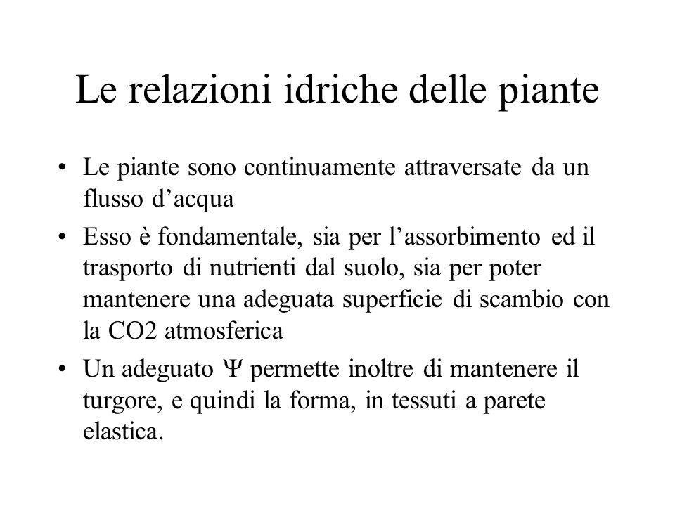Le relazioni idriche delle piante