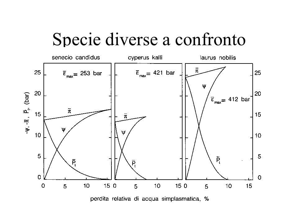 Specie diverse a confronto