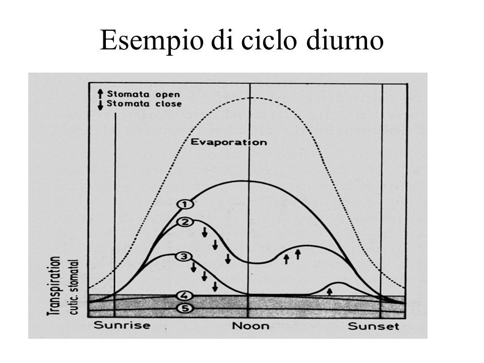 Esempio di ciclo diurno