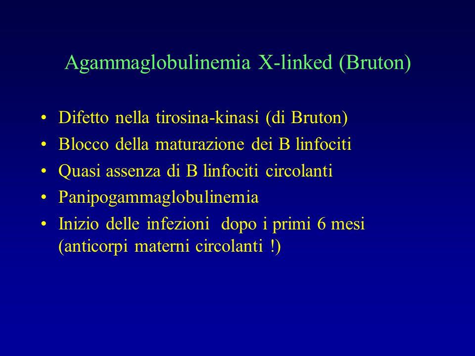 Agammaglobulinemia X-linked (Bruton)