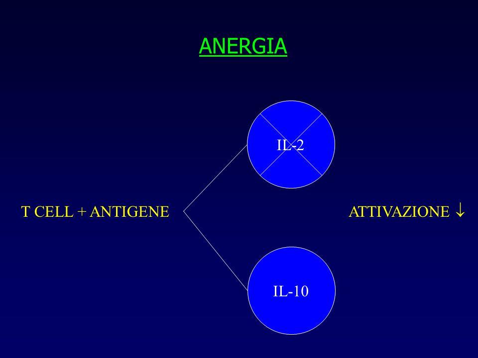 ANERGIA IL-2 T CELL + ANTIGENE ATTIVAZIONE  IL-10