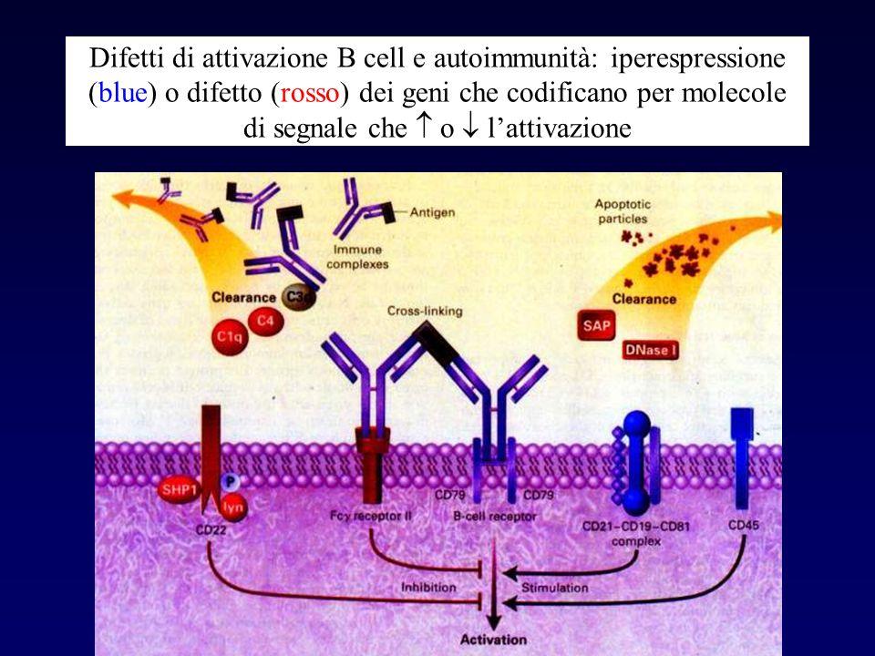Difetti di attivazione B cell e autoimmunità: iperespressione (blue) o difetto (rosso) dei geni che codificano per molecole di segnale che  o  l'attivazione