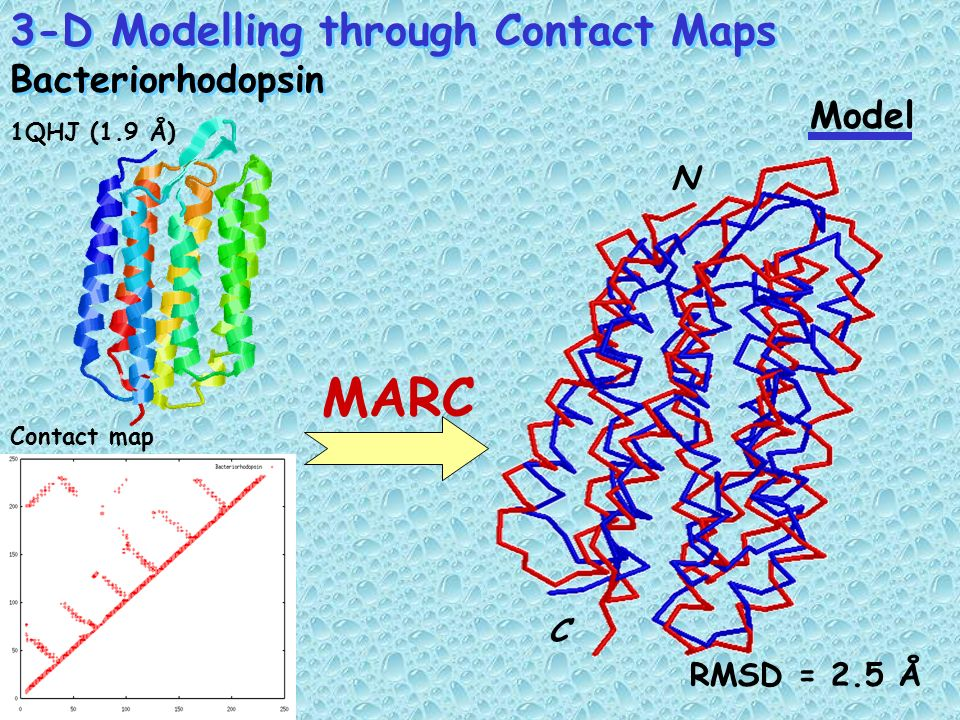 MARC 3-D Modelling through Contact Maps Bacteriorhodopsin Model N C